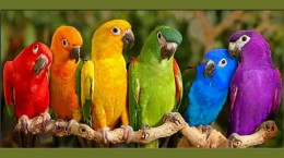 Colorful-Birds-Parrots